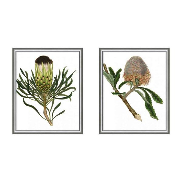 Framed Antique Protea on White I & II $795 each