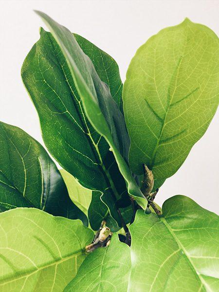 Fiddle Leaf Fig Artificial