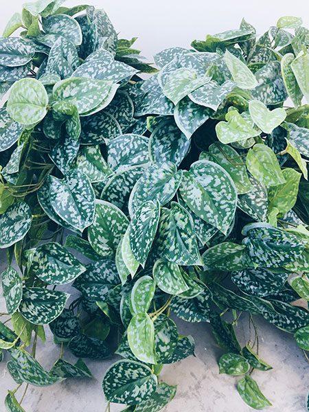 PATHOS PLANT ARTIFICIAL SHACK