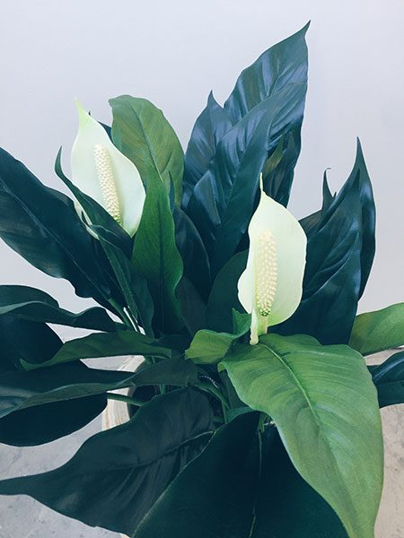 Peace Lily Plant Artificial