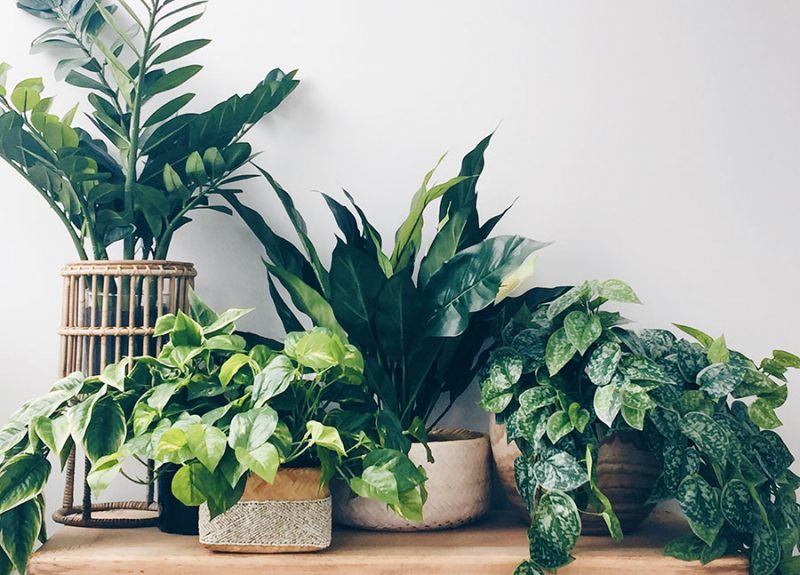 How to decorate with indoor plants