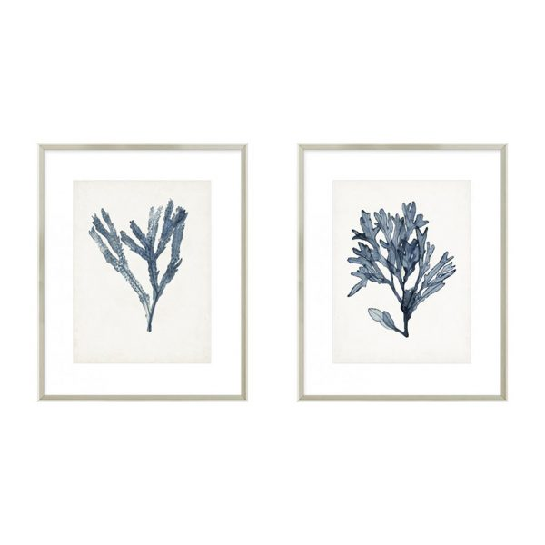 Seaweed Specimens I & II $320 each