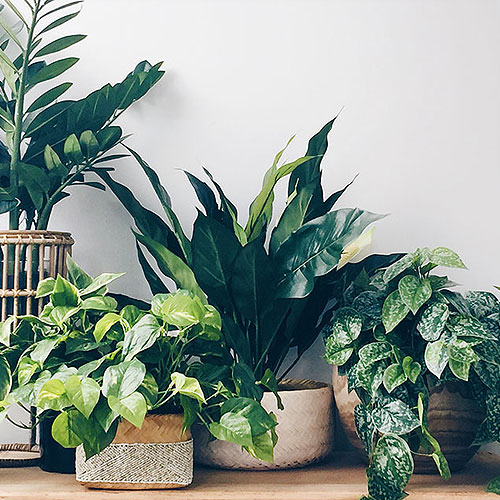 Top Indoor Plants for 2018